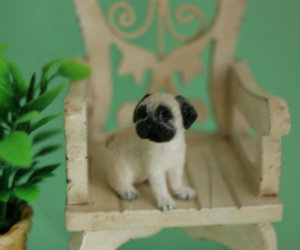 Miniature pug dog gift