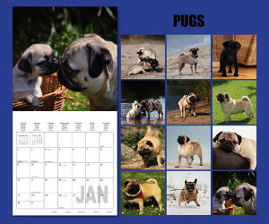 For the Love of Pugs Deluxe Wall Calendar